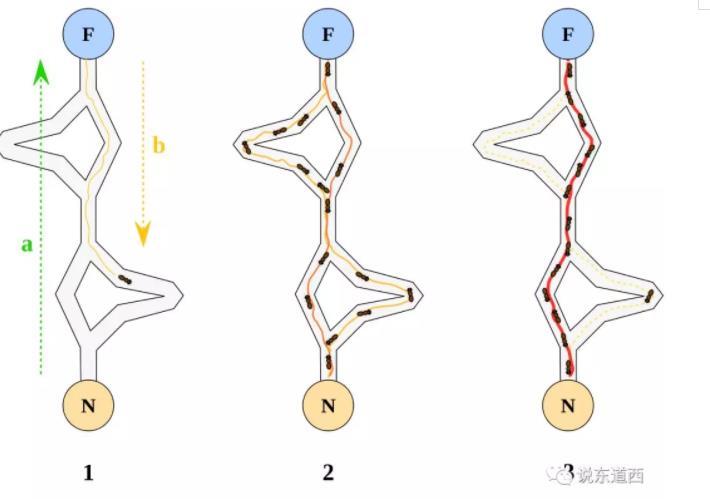 神經.jpg